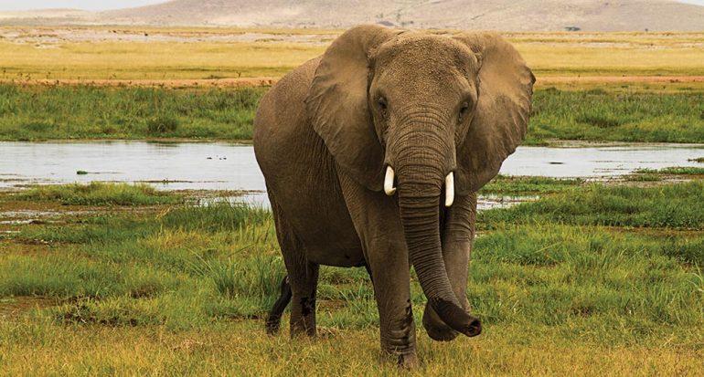 Elefantes por doquier