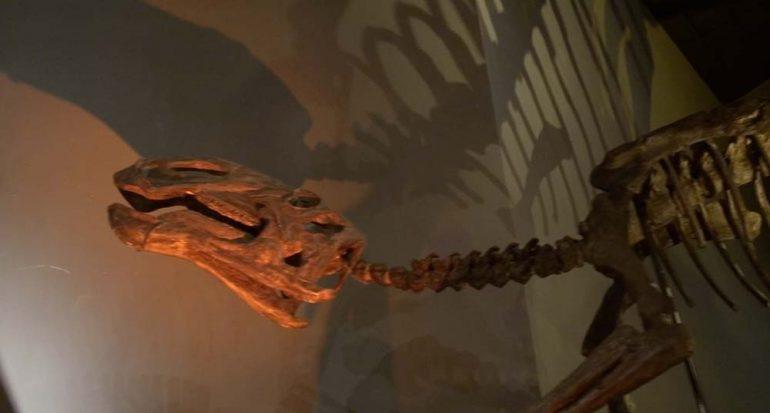 En busca del esquivo dinosaurio X