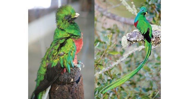 En busca del quetzal