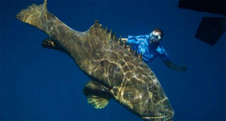 En el agua con los peces más grandes del mundo