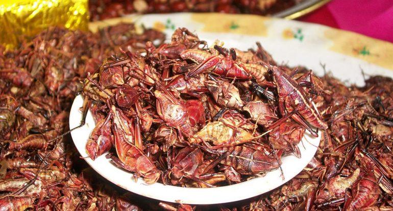 En este 2018 los insectos son considerados alimento en la Unión Europea