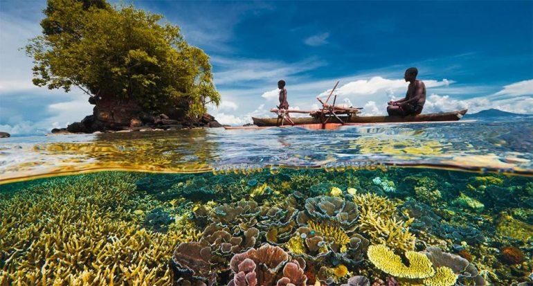 Encuentran la salvación de los corales