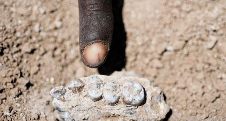Encuentran nueva especie de antepasado humano en Etiopía