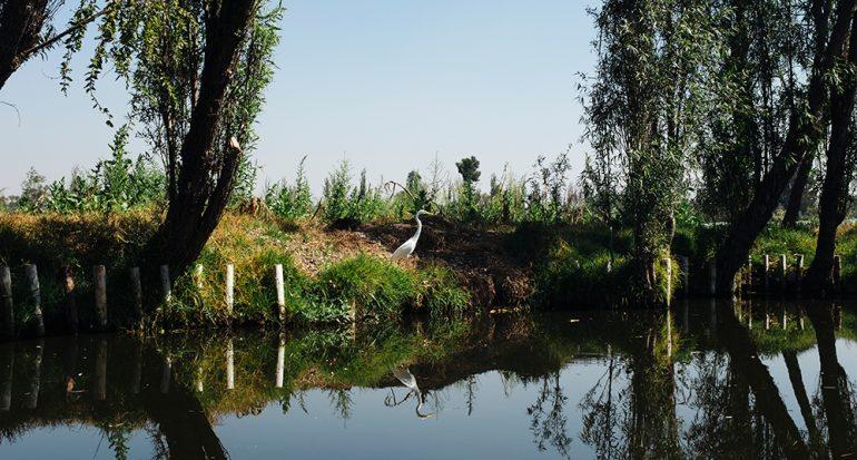 Encuentro internacional en Xochimilco sobre biodiversidad y medio ambiente
