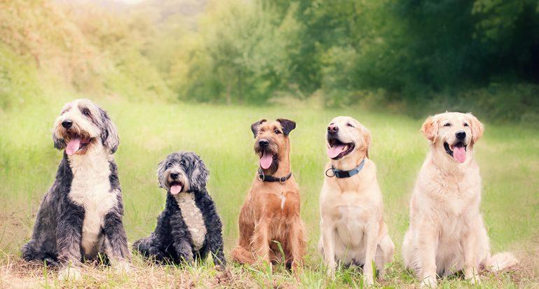 España a favor de las mascotas