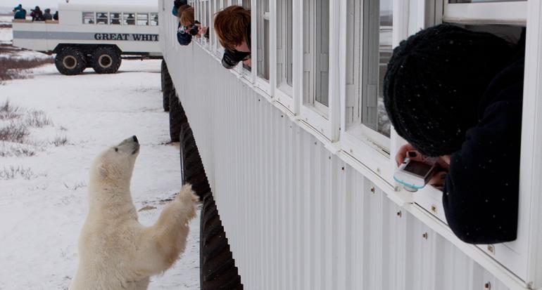Este es el mejor hotel del mundo para ver a los osos polares