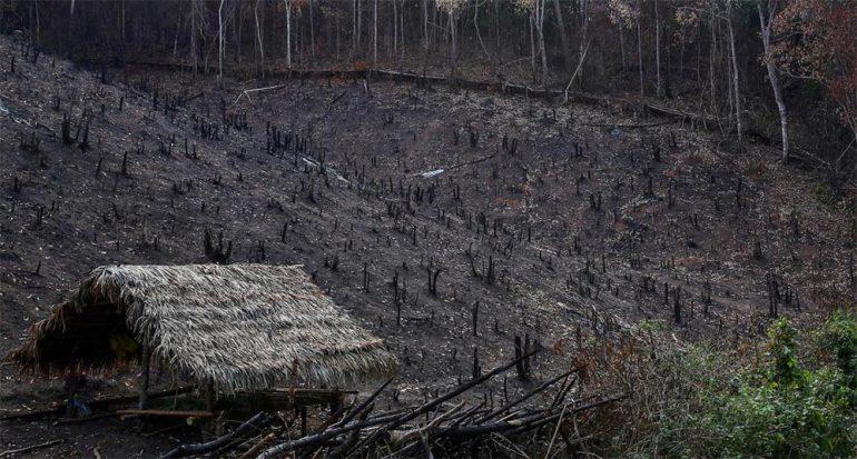 Estos agricultores talan y queman bosques