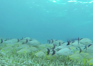 Explora el arrecife de Puerto Morelos