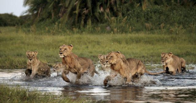 Familia que protege a los depredadores