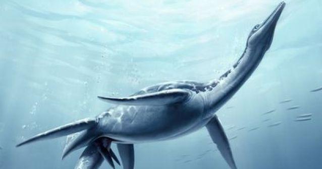 Feto de plesiosaurio prueba parto