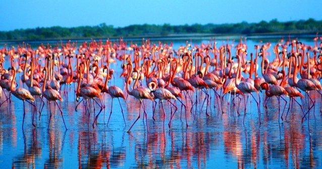 Flamencos en el golfo de México