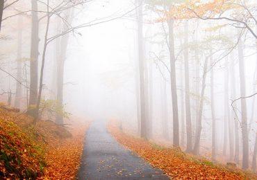 Foto del Lector: la esencia del otoño