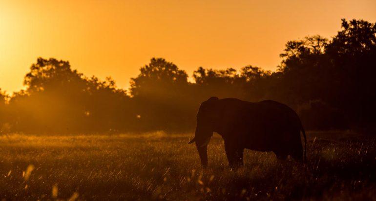 Fotogalería | 10 datos sobre los elefantes