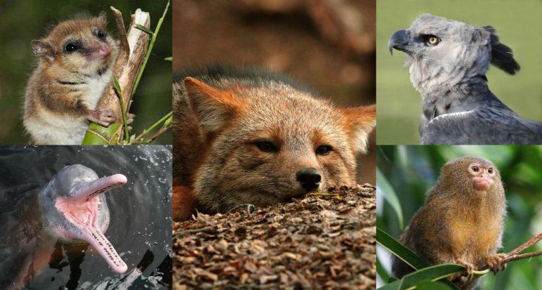Fotogalería | 14 especies endémicas de Latinoamérica que debes conocer