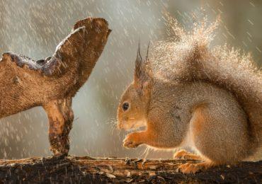 Fotogalería | Bajo la lluvia