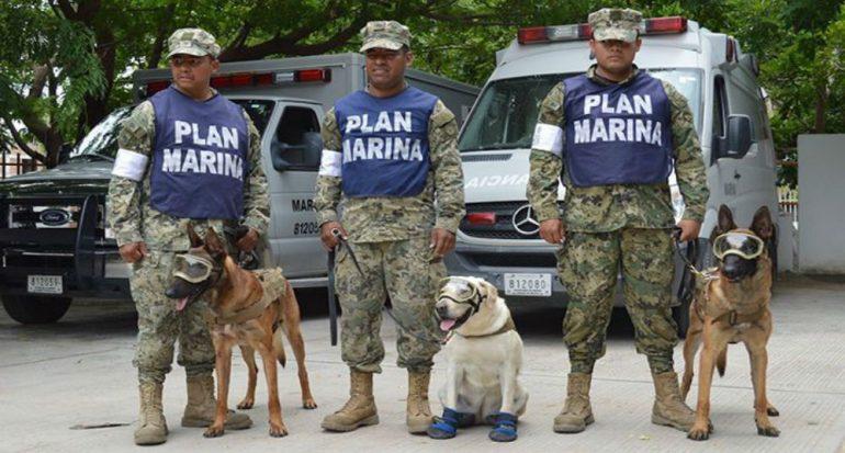 Fotogalería | Los perros que están salvando a México