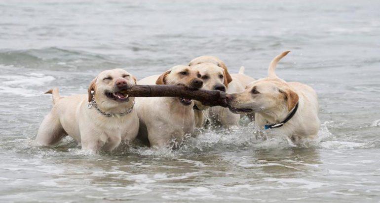 Fotogalería: Verano de perros