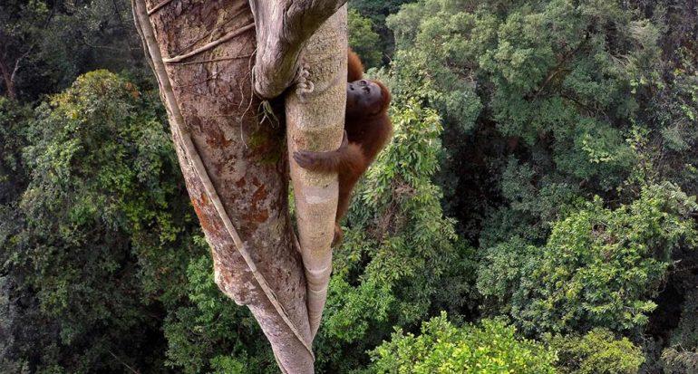 Fotos de National Geographic premiadas por World Press Photo