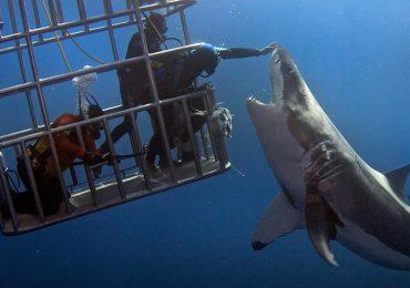 Fotos muestran lo que no debes hacer con los tiburones