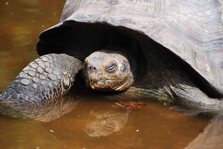 Galería | Criaturas de las Islas Galápagos Parte 1