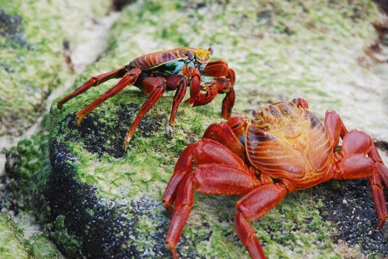 Galería | Criaturas de las Islas Galápagos Parte 2