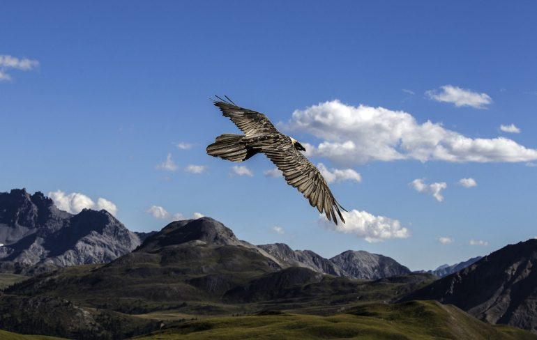 Galería | El Parque Nacional Suizo