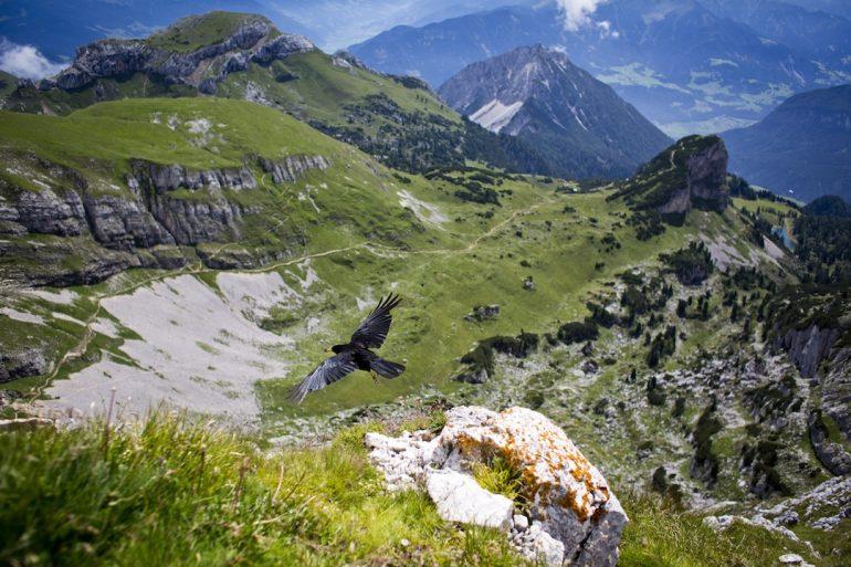 Galería | El sorpresivo Tirol
