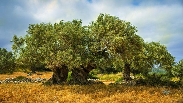 Galería | En las ramas