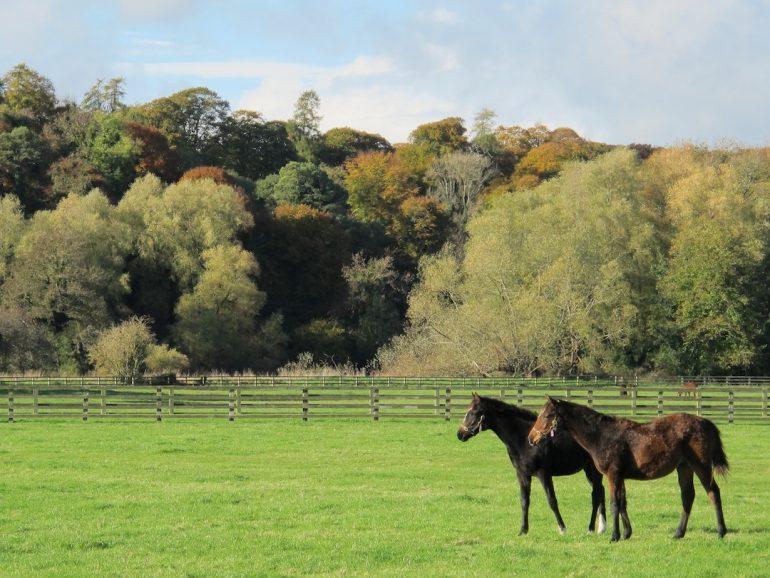 Galería | Para los amantes de los caballos