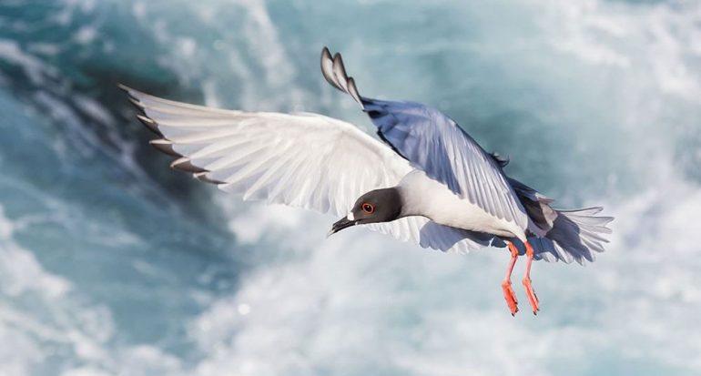 Ganadores del concurso Galápagos Conservation Trust 2017