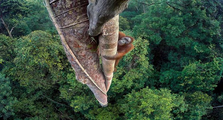 Ganadores del concurso Wildlife Photographer of The Year 2016