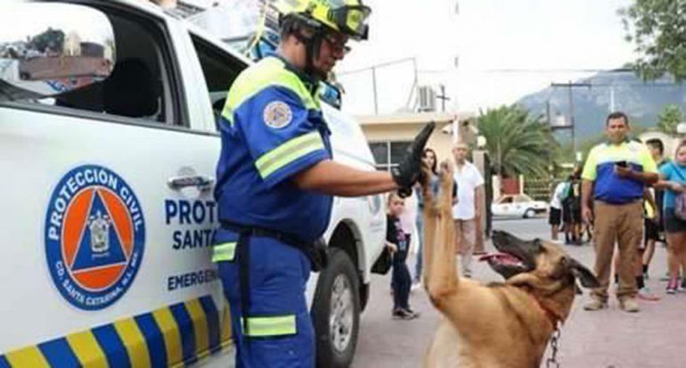 Héroes caninos: Conoce a los perros rescatistas de México