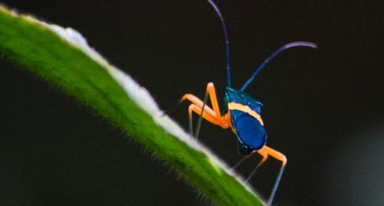 Hermoso insecto