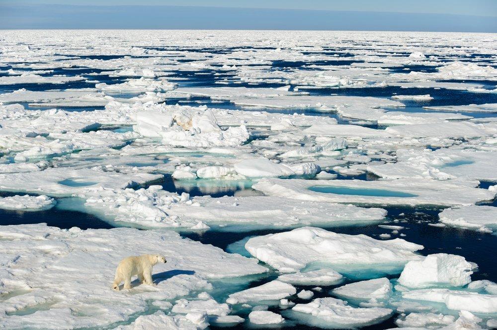 Hielo marino, menor y menor | National Geographic en Español