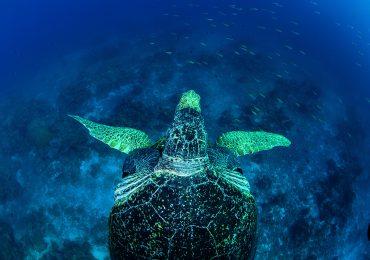 Historia de dos atolones
