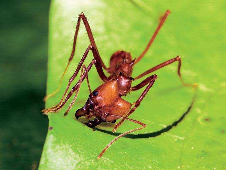 Hormigas: cambio de profesión