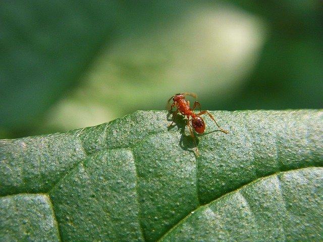 Hormigas y su protocolo de información
