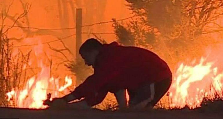 Increíble rescate de un conejo de un incendio en California
