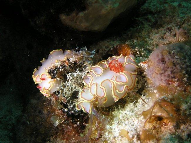 La Gran Barrera de Coral agonizante