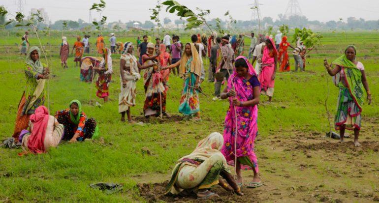 La India planta 66 millones de árboles en menos de 12 horas