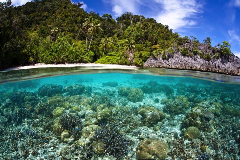 La ONU resalta amenazas a la biodiversidad