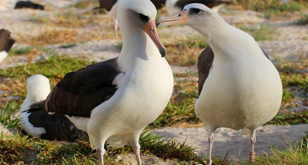 La albatros Wisdom y otras mamás increíblemente viejas