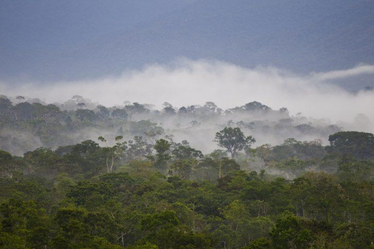 La altitud de los bosques