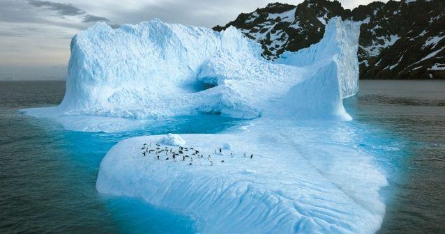 La casa de los pingüinos