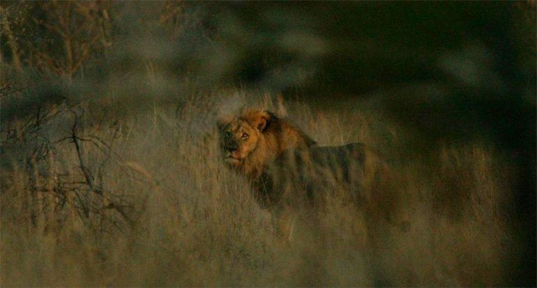 La confusión respecto al león Jericó