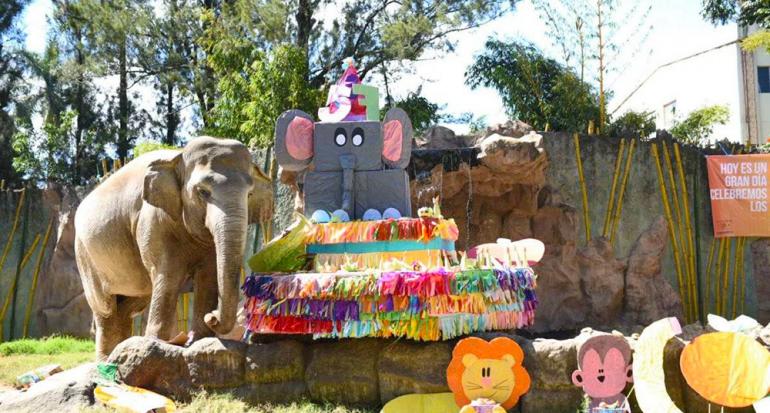 La elefanta Trompita celebra 57 años a lo grande