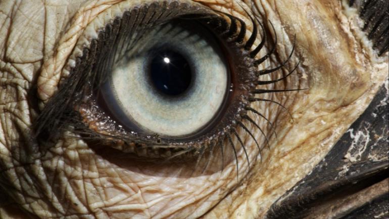La evolucion del ojo