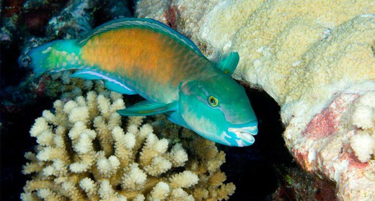 La extraña vida sexual de los animales marinos