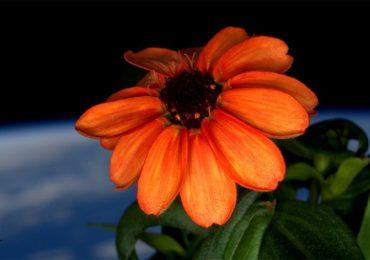 La flor en el espacio