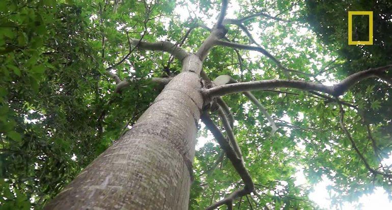 La función de los manglares